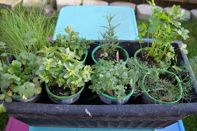 Plant an herb garden for mom @michellepaigeblogs.com