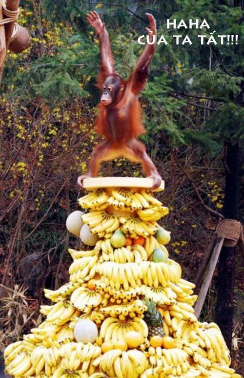 Hình ảnh vui khỉ ăn chuối