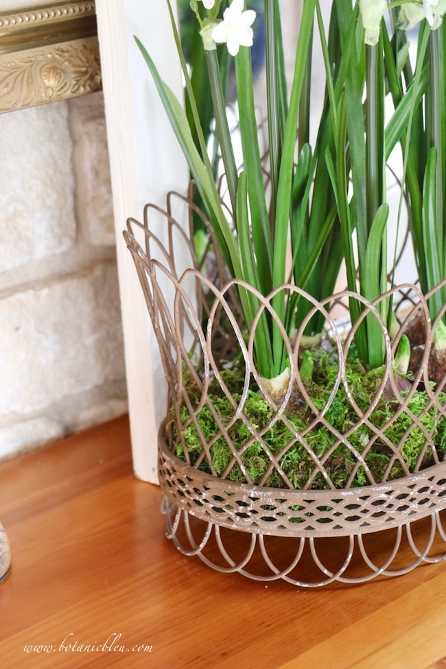 Breath of Spring French Country Wire Basket with mixed real moss and artificial daffodils
