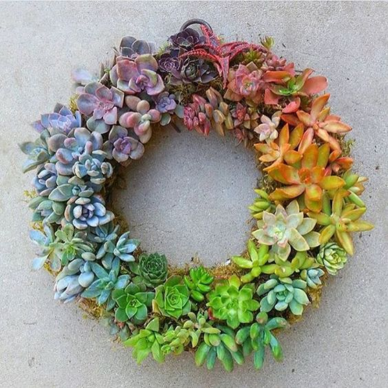 14 Ways to Display Succulents - Succulent Wreath