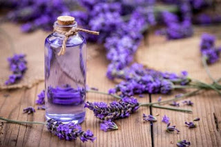 oil for hair growth and hair fall is Lavender oil