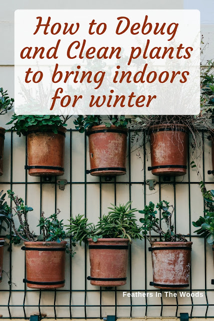 Debug and Clean plants to bring indoors for winter