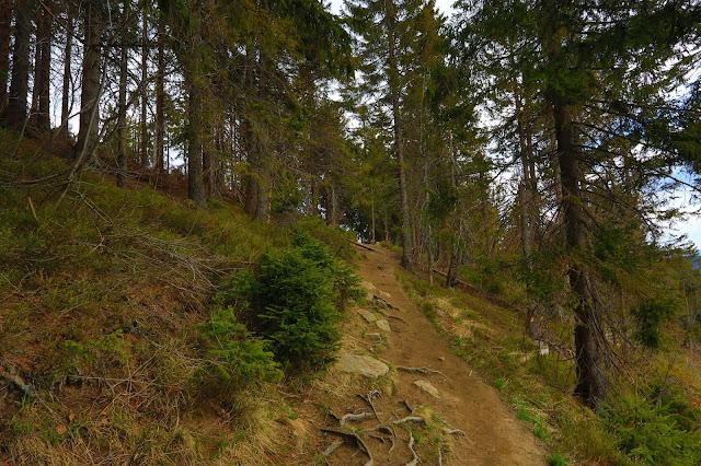 Szlak do schroniska na Turbacz od strony Nowego Targu (końcówka)