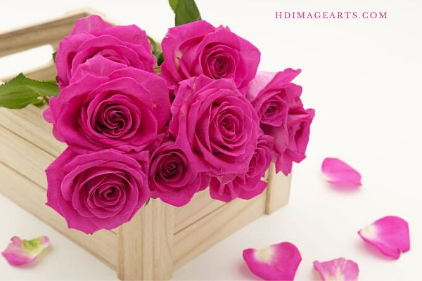 flowers-lmages-for-love-2