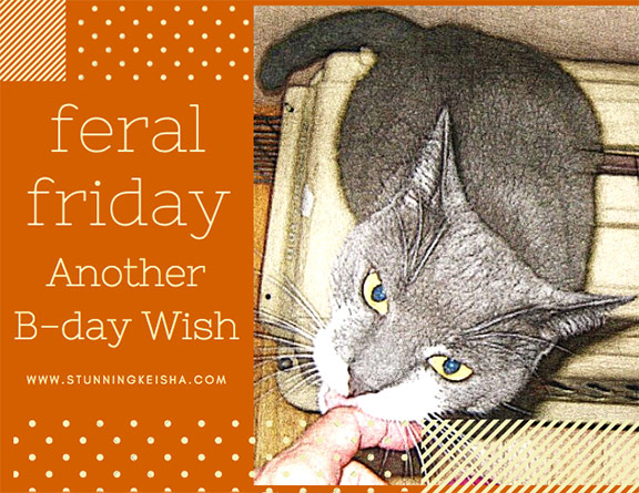 Another Feral Friday Birthday Wish