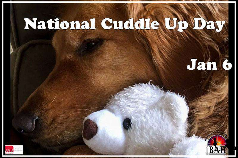 National Cuddle Up Day Wishes pics free download