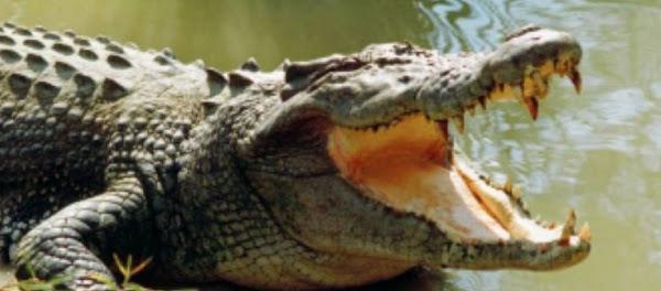 Άνδρας Βούτηξε Σε Απαγορευμένη Λίμνη Και Τον Έφαγε Κροκόδειλος (Βίντεο)