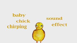 learn chicken sounds