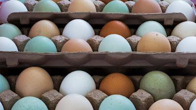 mavi-yumurta-faydalari-nelerdir