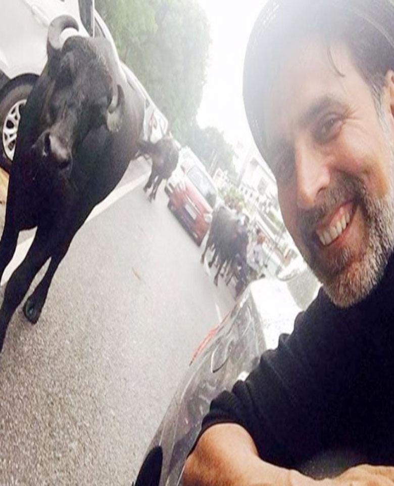 akshay-kumar-selfie-with-buffalo-on-road