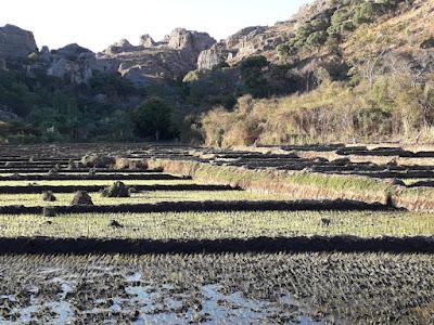 arrozales-en-terraza-en-las-tierras-altas-en-madagascar-con-enlacima