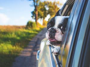 5 maneras fáciles de ayudar a su perro a vivir una vida más larga y saludable