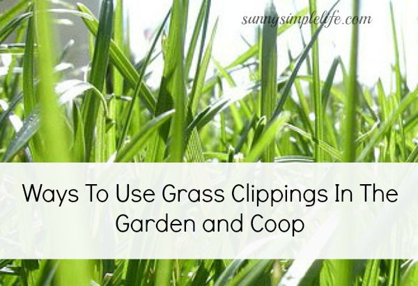 Spread The Clipping Around Your Garden Beds As Mulch Make Sure To Fresh Clippings Thinly So They Dry Out Properly Gr That Is Wet And Decaying
