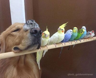 Lucunya Persahabatan Anjing Hamster Dan Burung