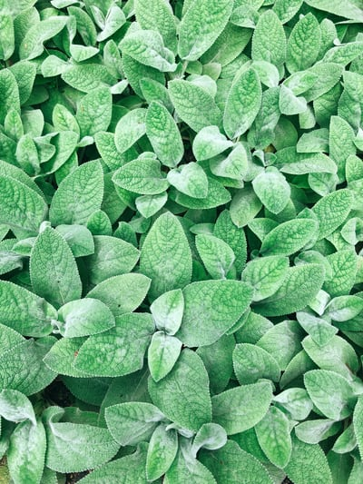 The Most Important Questions About Herbs