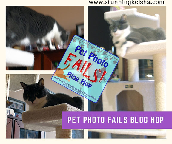 This Month's 5 Best Pet Photo Fails