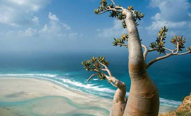 جزيرة سقطرى اليمنية .