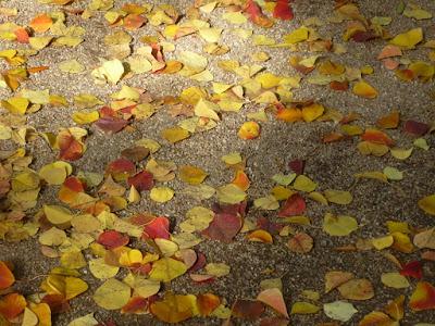 Hojas caídas en el Jardín Botánico de Valencia