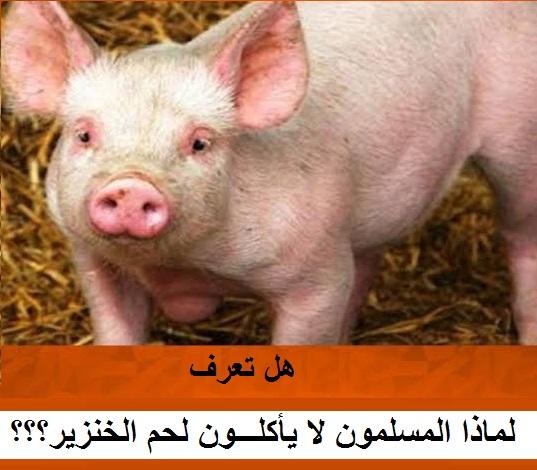 هل تعرف لماذا المسلمون لا يأكلون لحم الخنزير؟؟؟