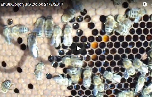 Επιθεώρηση μελισσιού 24/3/2017