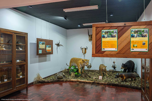 Museu de História Natural Capão da Imbuia - MHNCI - animais empalhados