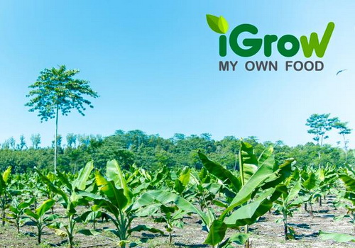 Tinuku iGrow presents virtual farm with real harvest