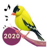 Birds Voice Amazing Technology Touch Anywhere   Amazing Technology 2020