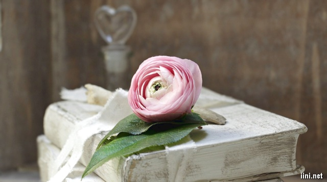 ảnh hoa hồng và sách