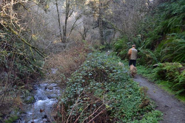 trail back along the creek
