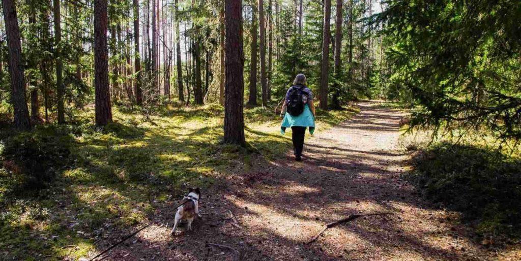 Windy Ridge Trail -- Summer