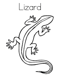 Lizard Coloring Pages With Name