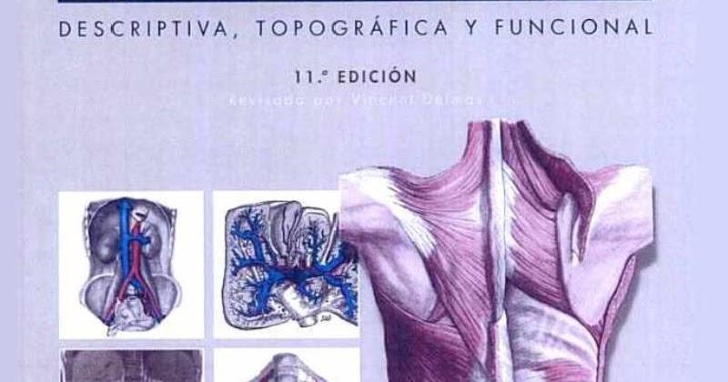 rouviere anatomia pdf descargar gratis