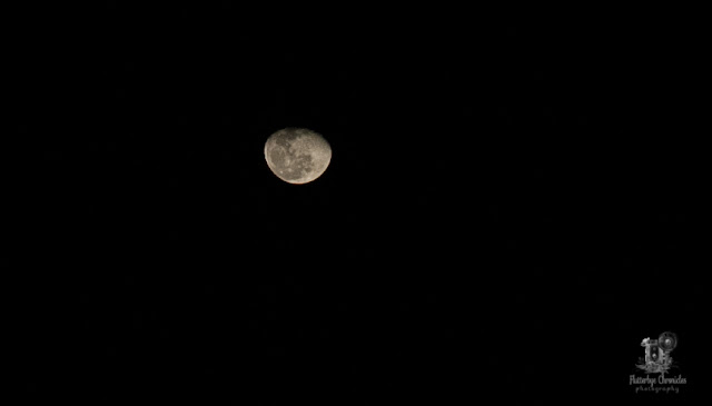 Moon January 13 2020 (©Jenny Bell - Flutterbye Chronicles)