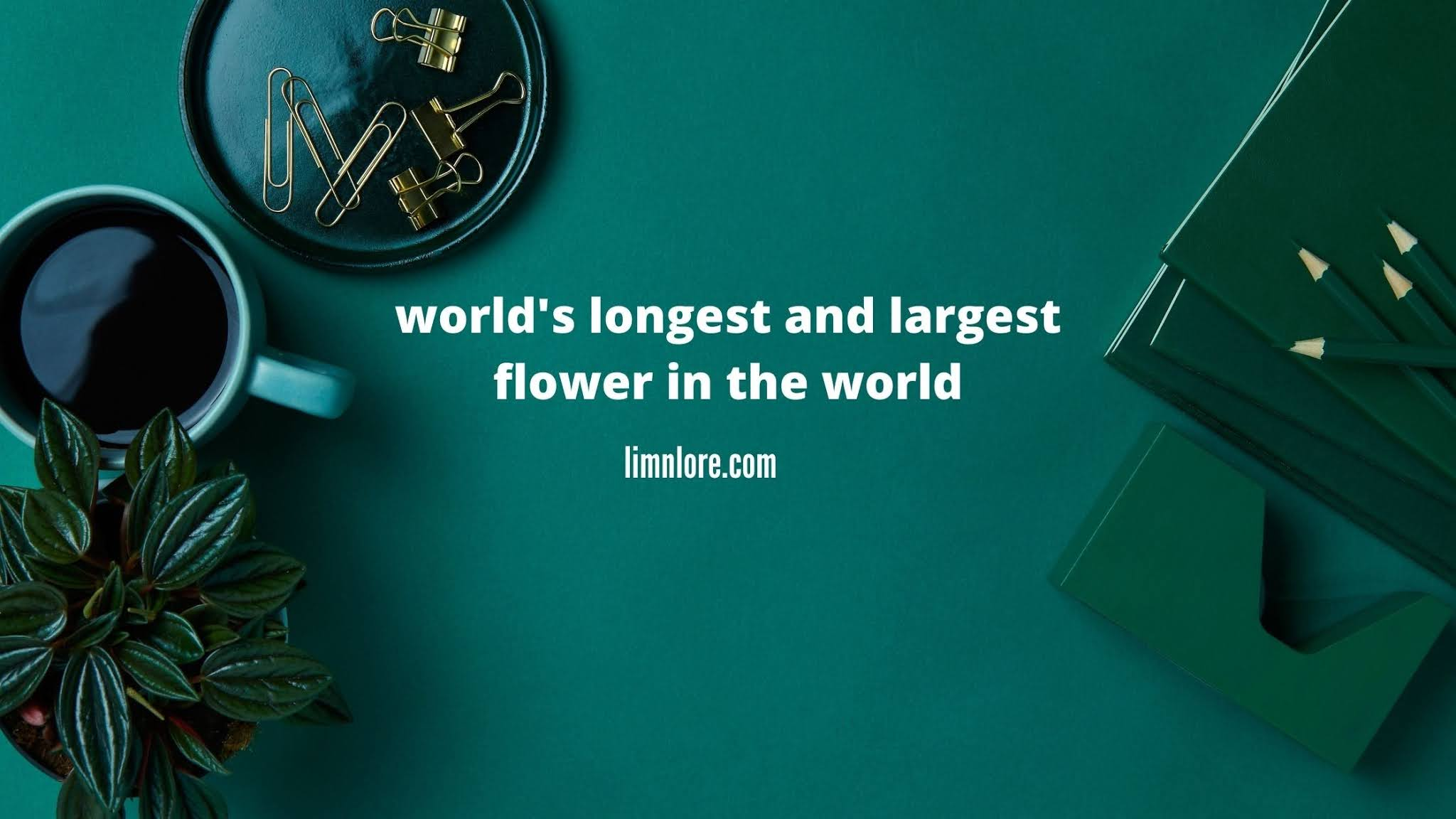 world's longest and largest flower in the world