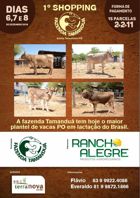 Fazenda Tamanduá realiza shopping de gado de elite