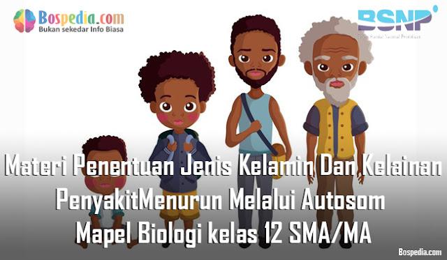Materi Penentuan Jenis Kelamin Dan Kelainan/Penyakit Menurun Melalui Autosom Mapel Biologi kelas 12 SMA/MA