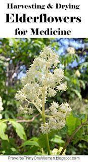 https://proverbsthirtyonewoman.blogspot.com/2018/04/harvesting-drying-elderflowers-for.html