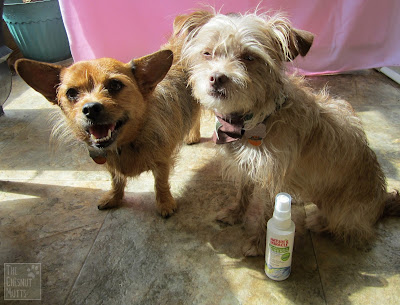 Jada and Bailey with a bottle of Nature's Miracle Allergen Blocker Pet Spray