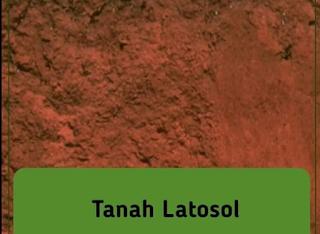 gambar tanah latosol