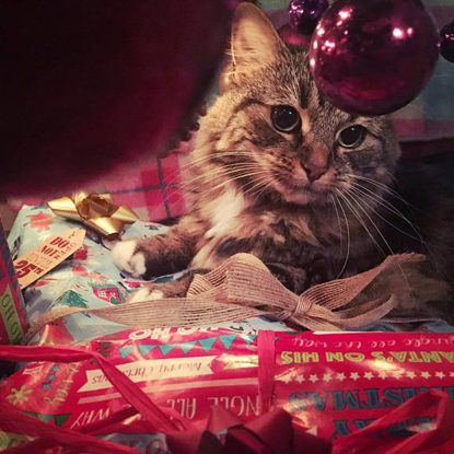 tabby cat sitting on Christmas presents under a Christmas tree