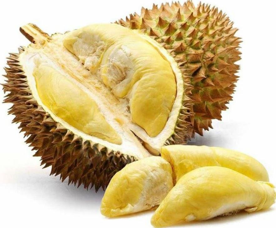 Bibit durian duri hitam kaki 3 Sulawesi Utara