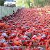 Κόκκινα καβούρια κλείνουν δρόμους για να γεννήσουν..
