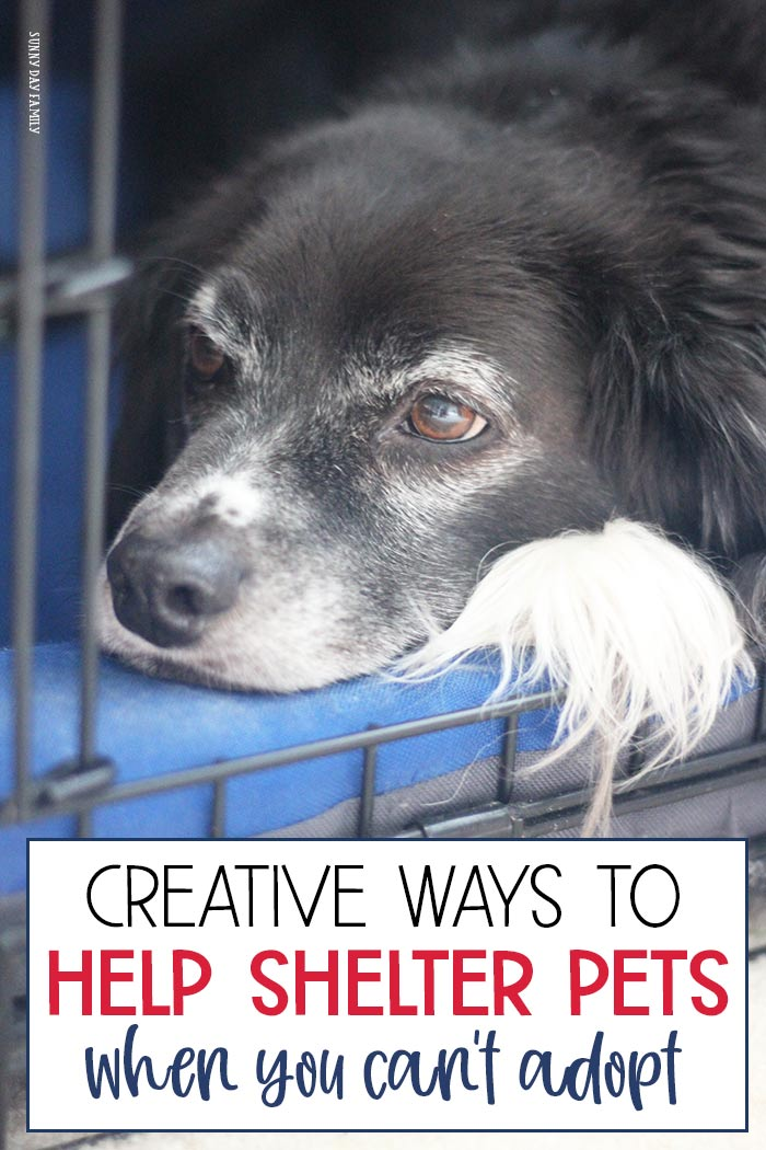 Creative and family friendly ways to help shelter animals! Part of Family Dinner Book Club, these ideas are perfect to help rescue pets and shelter animals in need. Perfect for service projects, acts of kindness projects, or just because. #pets #dogs #cats #adoptdontshop #shelteranimals #rescue