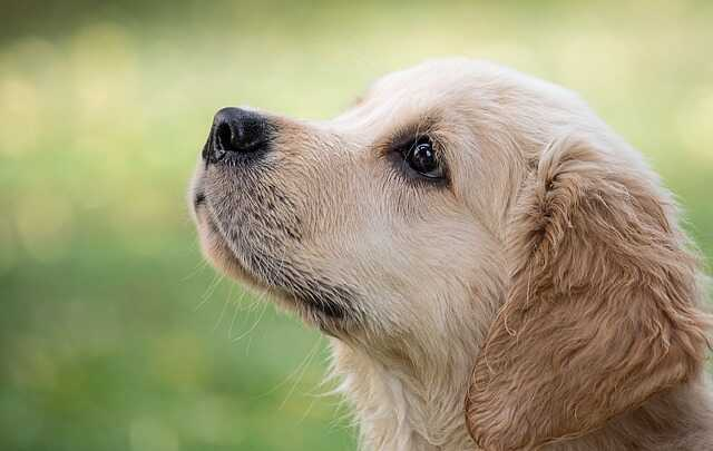 cute puppy images free download