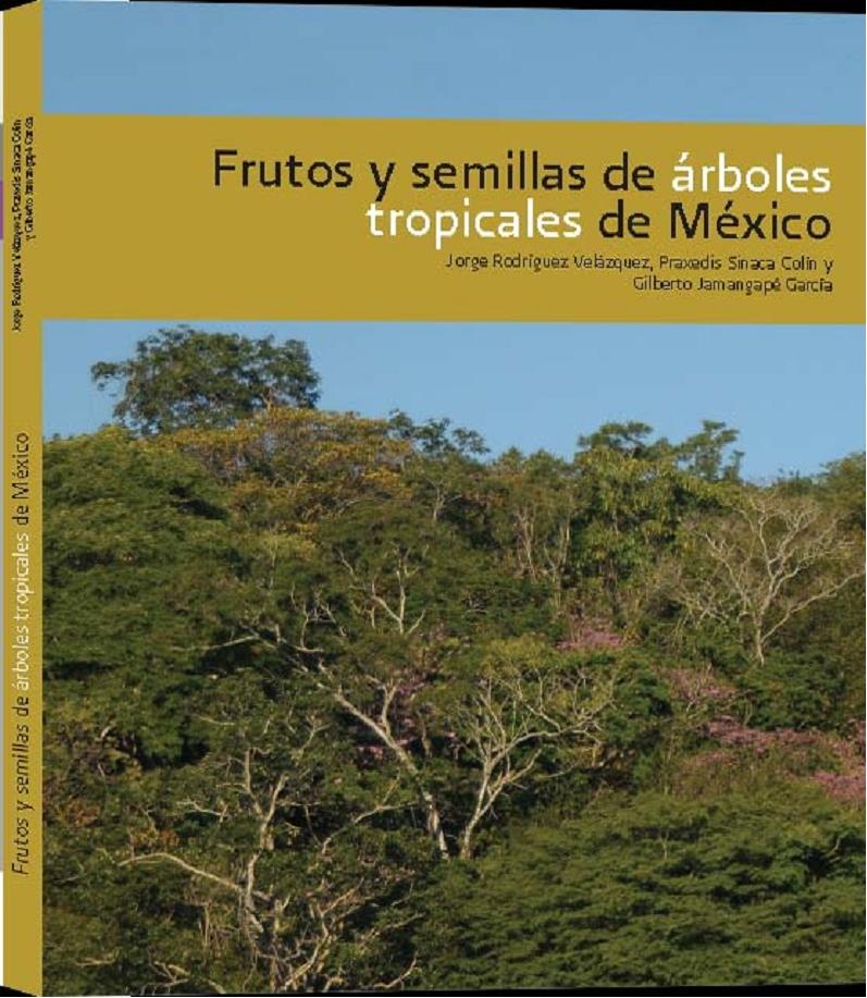Jehuite frutos y semillas de rboles tropicales de m xico for Arbol de fotos manual