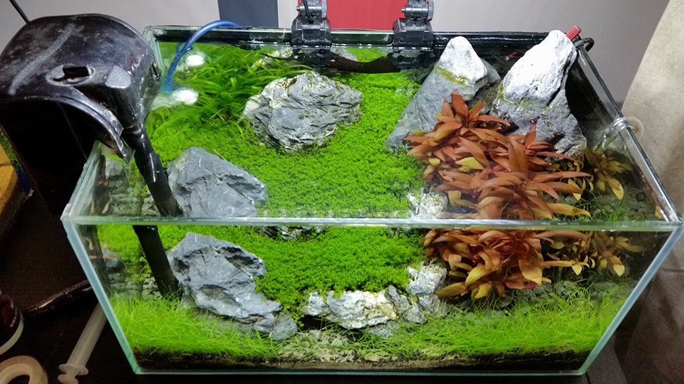 the benefits of using co2 in the planted aquarium. Black Bedroom Furniture Sets. Home Design Ideas