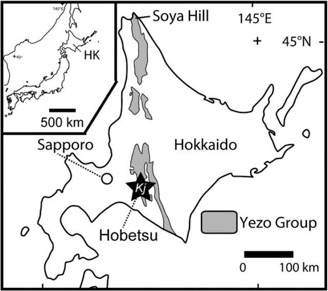A new duck-billed dinosaur, Kamuysaurus japonicus, identified