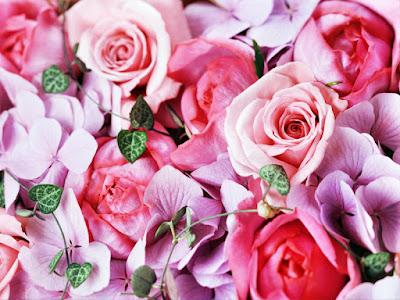 صور ورد ، صور زهور ، صور ورود
