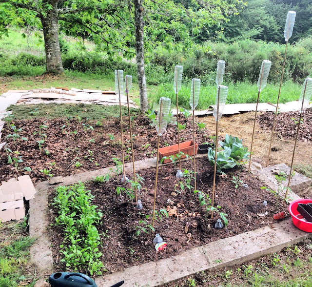 compost, Creuse, France, gardening, grow your own, Limousin, no dig, potager, printemps, retreat, Spring, vegetable garden, vegetables, companion planting, organic, Charles Dowding,