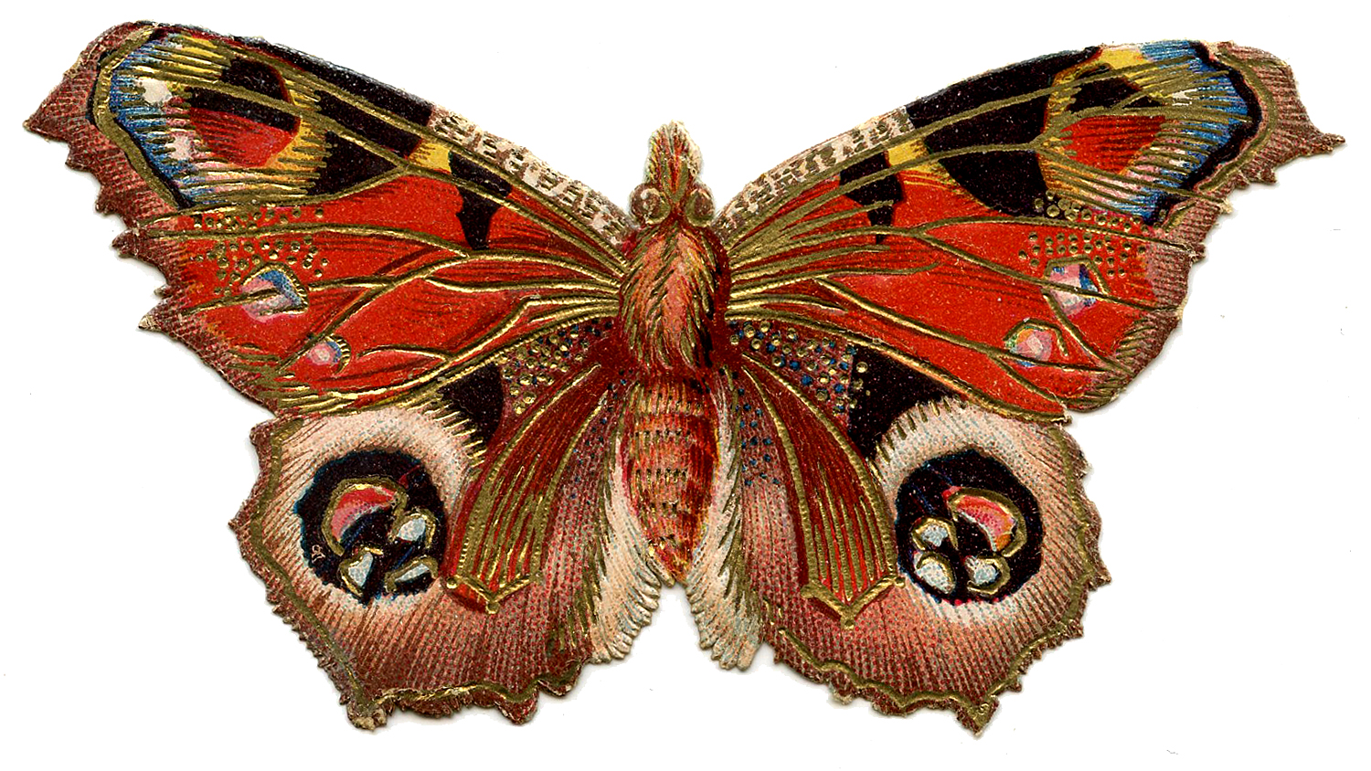 Butterflies For Sale - Butterfly Pict - photo#35